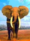 象帝国の戦士