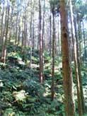 林道を抜けるとそこは山道だった