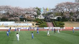 お花見も楽しめる武蔵野陸上競技場だ!