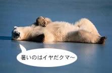 カナダでも暑いと文句を垂れるシロクマ