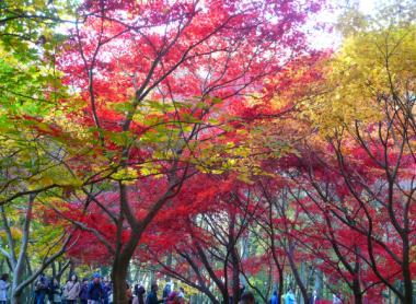 神代植物公園/紅葉
