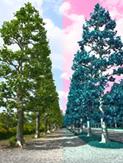 tree2tone.jpg