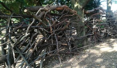 トロールの森 自然的距離