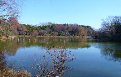 winter_park.jpg