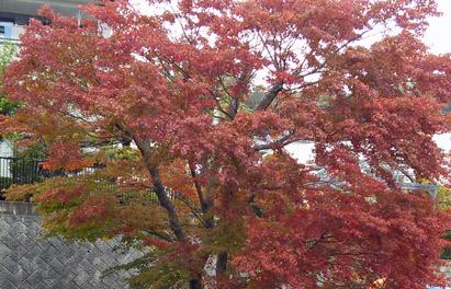 小淵沢の紅葉
